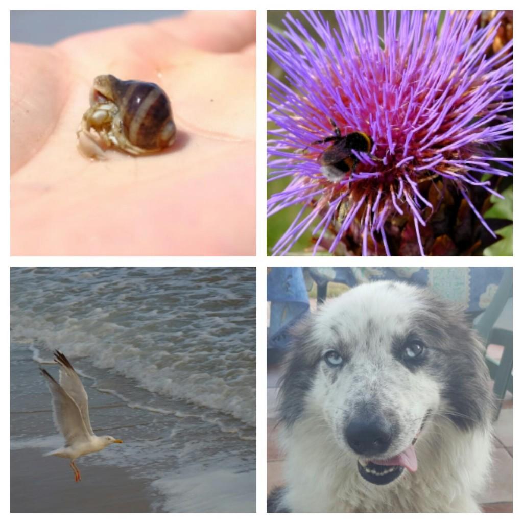 Les Sables D'olonne hayvanlari deniz salyangozu, ari, marti,kopek