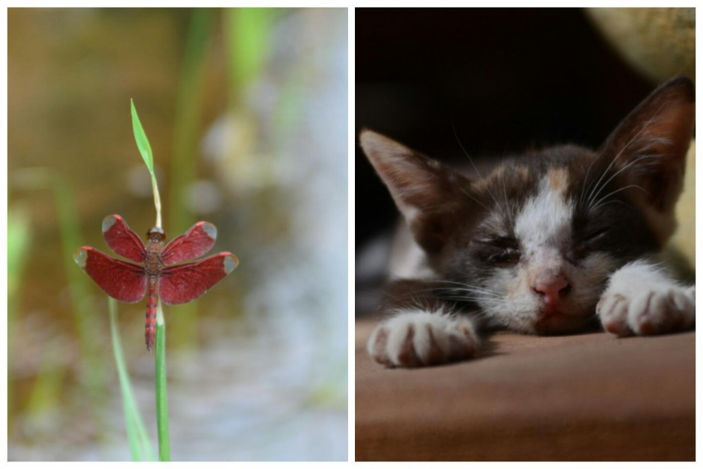 a cat and a dragonfly