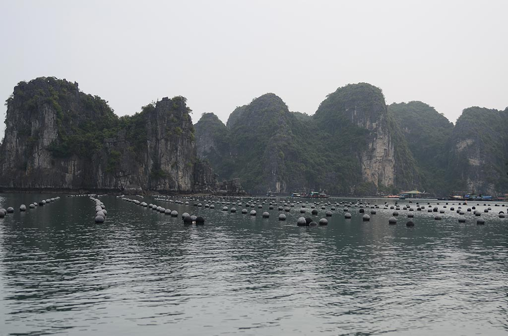 oyster farm in halong bay vietnam