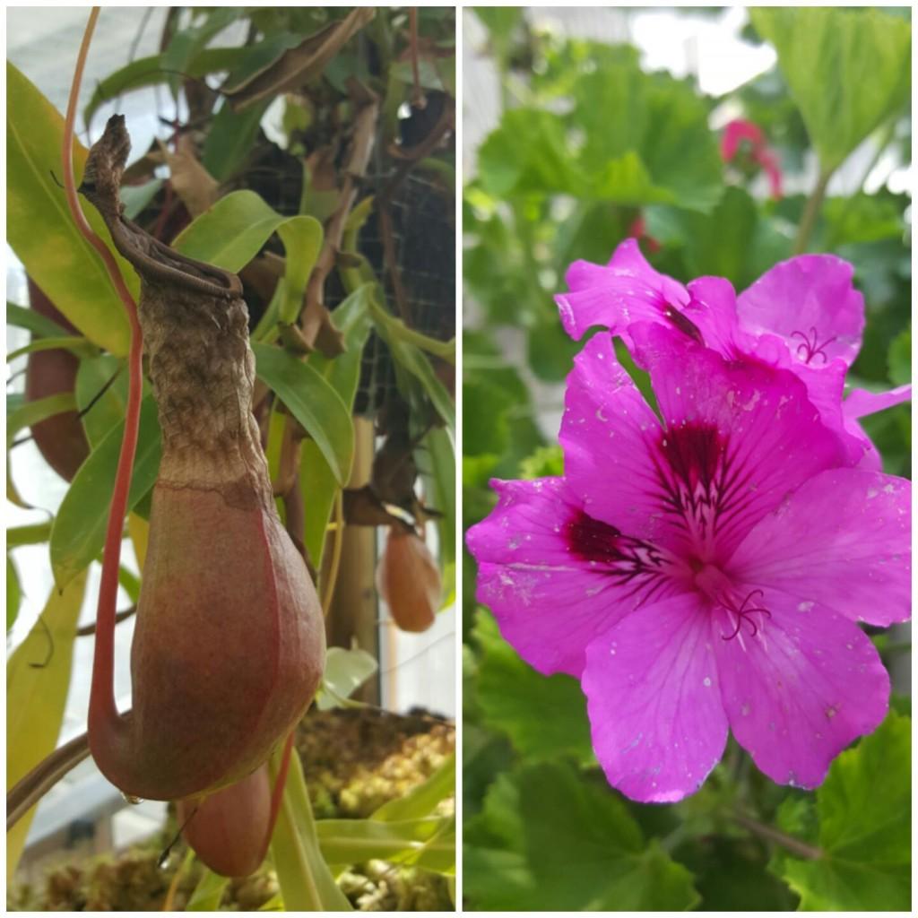 botanical garden copenhag denmark
