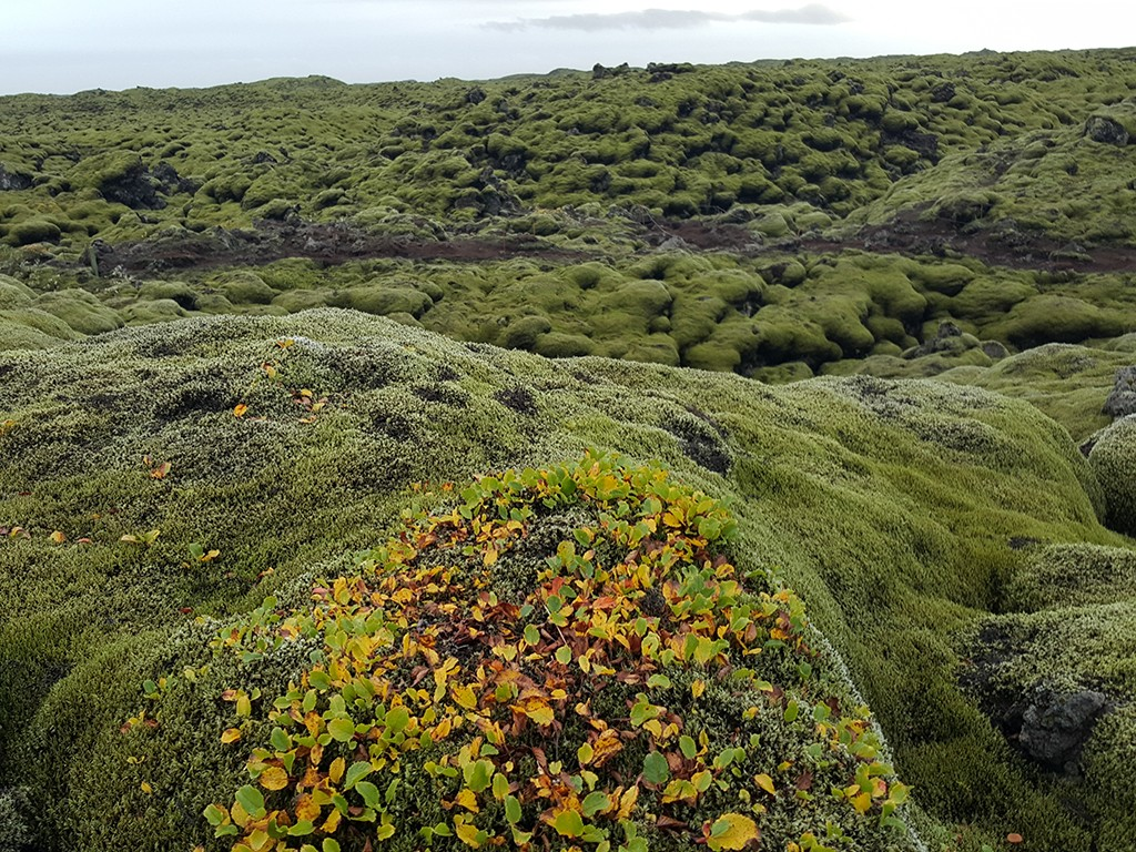 turfs of iceland