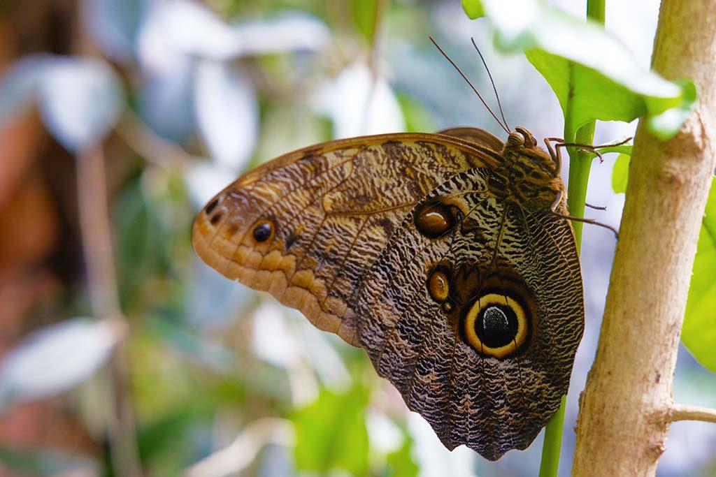 butterfly in vienna butterfly museum