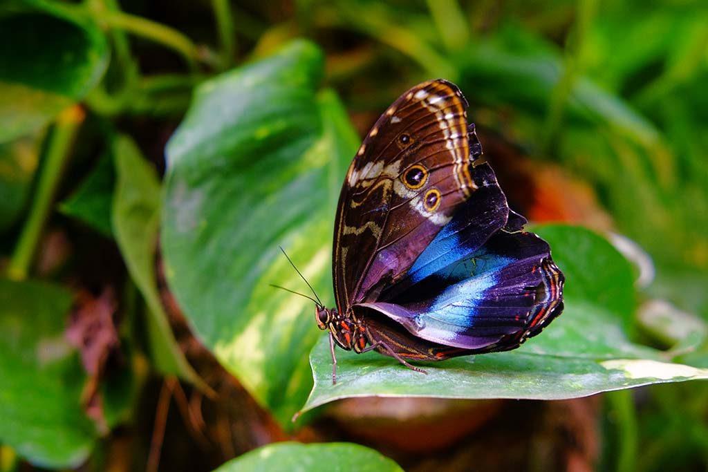 butterfly in butterfly museum in vienna