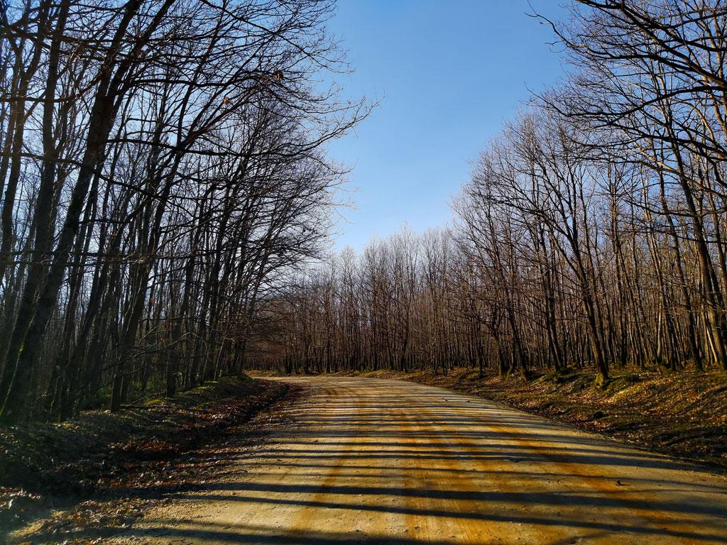 igneada,milli park, longoz ormanlari